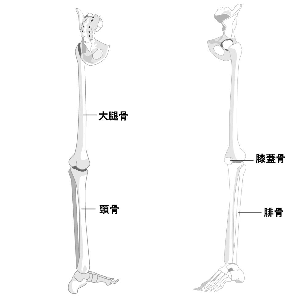 足首を細くする方法 ストレッチ